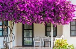Terraço coberto de vegetação com as flores Fotos de Stock Royalty Free