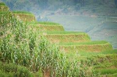 Terraço da etapa do arroz em Vietnam Imagem de Stock Royalty Free