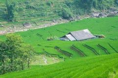 Terraço da etapa do arroz em Vietnam Foto de Stock Royalty Free