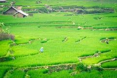 Terraço da etapa do arroz em Vietnam Fotografia de Stock Royalty Free