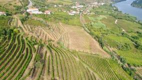 Terraço da vista aérea na inclinação no vale de Douro filme