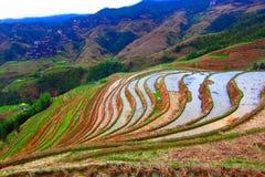 Terraço de Guizhou Longji fotografia de stock royalty free