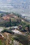 Terraço do arroz Foto de Stock Royalty Free