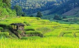 Terraço do arroz Imagens de Stock Royalty Free