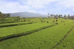 Terraço do arroz com vista das montanhas em Bali Fotografia de Stock Royalty Free