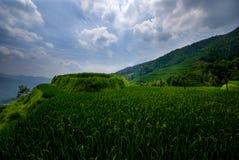 Terraço do arroz de Longsheng Imagem de Stock