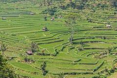 Terraço do arroz de Tegalalang Imagem de Stock Royalty Free