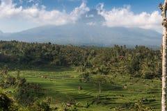 Terraço do arroz de Tegalalang Imagens de Stock