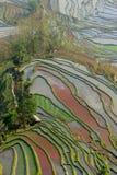Terraço do arroz de YuanYang Fotografia de Stock