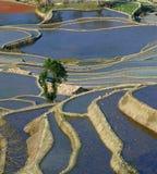 Terraço do arroz de YuanYang Fotografia de Stock Royalty Free