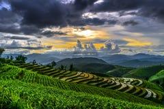 Terraço do arroz e nebuloso Imagens de Stock