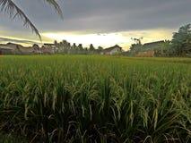 Terraço do arroz em Ubud em Bali, Indonésia imagem de stock