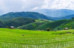 Terraço do arroz em uma iluminação nebulosa da estação das chuvas fotografia de stock royalty free