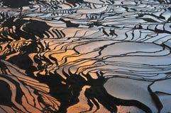 Terraço do arroz em Yuan Yang, China fotos de stock royalty free
