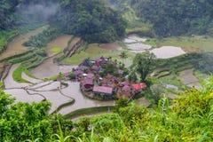 Terraço do arroz no banaue Imagens de Stock Royalty Free