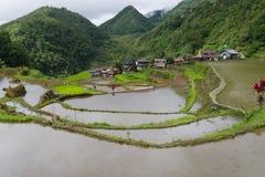 Terraço do arroz no banaue Imagem de Stock