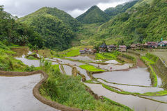 Terraço do arroz no banaue Foto de Stock