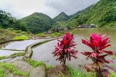 Terraço do arroz no banaue Foto de Stock Royalty Free