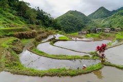 Terraço do arroz no banaue Fotos de Stock