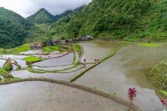 Terraço do arroz no banaue Imagens de Stock