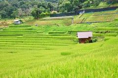 Terraço do arroz no distrito Chiang Mai Province da tanga de Chom do parque nacional de Doi Inthanon Fotografia de Stock