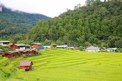 Terraço do arroz no distrito Chiang Mai Province da tanga de Chom do parque nacional de Doi Inthanon Imagens de Stock Royalty Free