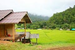 Terraço do arroz no distrito Chiang Mai Province da tanga de Chom do parque nacional de Doi Inthanon Foto de Stock