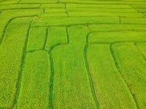 Terraço do arroz no distrito Chiang Mai Province da tanga de Chom do parque nacional de Doi Inthanon, Tailândia na vista aérea Imagens de Stock