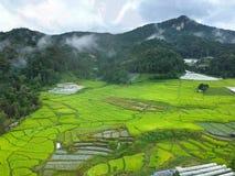Terraço do arroz no distrito Chiang Mai Province da tanga de Chom do parque nacional de Doi Inthanon, Tailândia na vista aérea Imagem de Stock Royalty Free