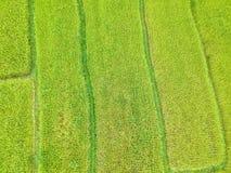 Terraço do arroz no distrito Chiang Mai Province da tanga de Chom do parque nacional de Doi Inthanon, Tailândia na vista aérea Imagens de Stock Royalty Free