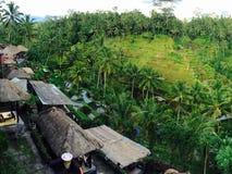 Terraço do campo de almofada do arroz de Bali fotos de stock royalty free