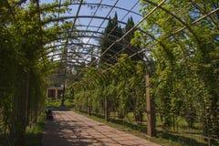 Terraço do jardim com hera Imagens de Stock
