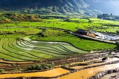 Terraço em Sapa Viet Nam Imagem de Stock Royalty Free