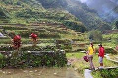 Terraço filipino do arroz fotos de stock royalty free