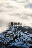 Terraço no nascer do sol, província do arroz de Yuanyang de Yunnan, China Foto de Stock