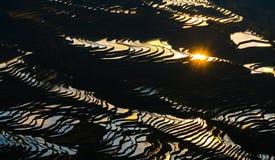 Terraço no por do sol, província do arroz de Yuanyang de Yunnan, China Imagem de Stock