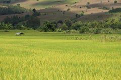 Terraço verde do campo do arroz Fotografia de Stock