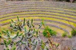 Terraços agrícolas circulares do Inca antigo no Moray usado para estudar os efeitos de circunstâncias climáticas diferentes em co fotografia de stock