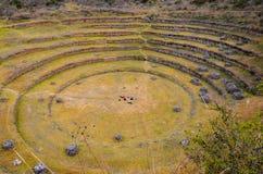 Terraços agrícolas circulares do Inca antigo no Moray usado para estudar os efeitos de circunstâncias climáticas diferentes em co foto de stock royalty free