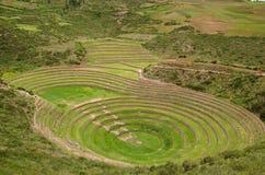 Terraços agriculturais no Moray, Peru do Inca Foto de Stock