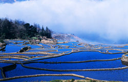Terraços azuis do arroz do yuanyang foto de stock royalty free