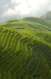 Terraços clássicos do arroz Imagem de Stock Royalty Free