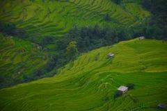 Terraços de Yuanyang Imagem de Stock Royalty Free