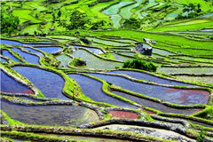 Terraços de Yuanyang, Yunnan do arroz, China Imagens de Stock Royalty Free