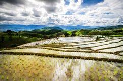 Terraços do arroz Imagem de Stock Royalty Free