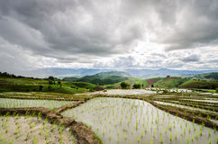 Terraços do arroz Fotos de Stock Royalty Free