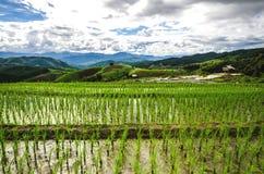 Terraços do arroz Fotografia de Stock Royalty Free