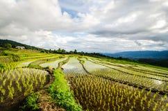 Terraços do arroz Imagens de Stock Royalty Free