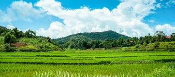 Terraços do arroz Foto de Stock Royalty Free