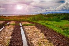 Terraços do arroz de Bali Fotografia de Stock Royalty Free